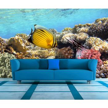 Tapeta - Mořské rybky