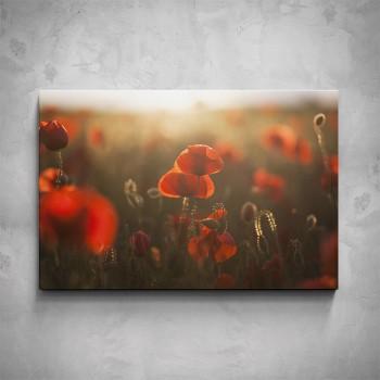 Obraz - Červený vlčí mák