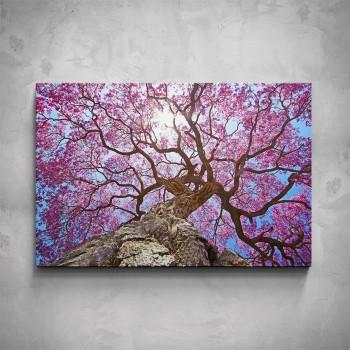 Obraz - Růžová koruna stromu