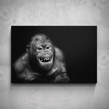 Obraz - Orangutan