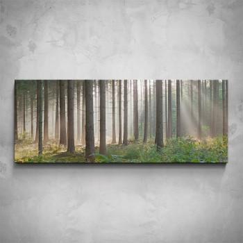Obraz - Smrkový les