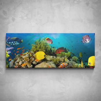 Obraz - Rybičky