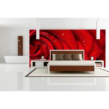 Tapeta - Detail růže