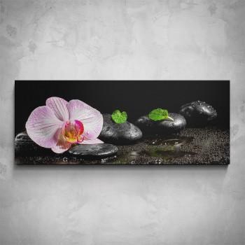 Obraz - Orchidej na kamenech