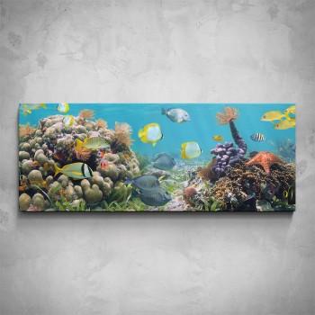 Obraz - Podmořský svět