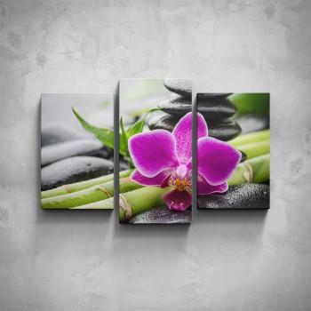 3-dílný obraz - Fialová orchidea