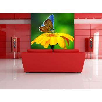 Tapeta - Motýl na květu 2