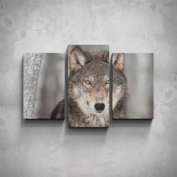 3-dílný obraz - Vlk