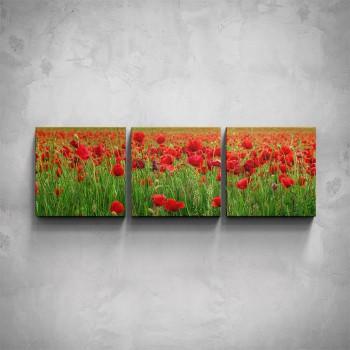 3-dílný obraz - Makové pole