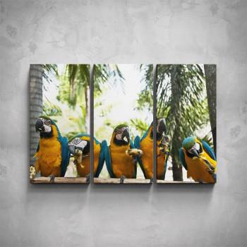 3-dílný obraz - Papoušci