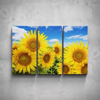 3-dílný obraz - Slunečnice
