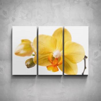 3-dílný obraz - Žlutá orchidej