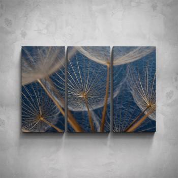 3-dílný obraz - Semínko pampelišky - makro