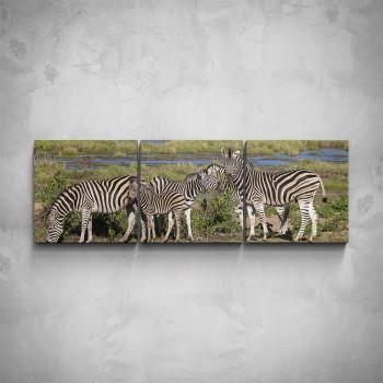 3-dílný obraz - Zebry