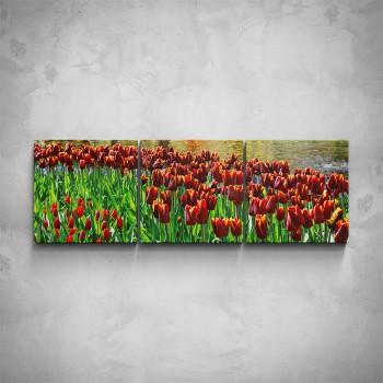 3-dílný obraz - Červené tulipány