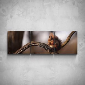 3-dílný obraz - Veverka