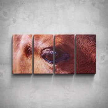 4-dílný obraz - Oko koně