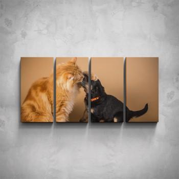 4-dílný obraz - Kočka a štěně