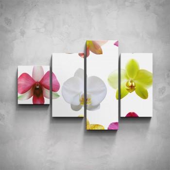 4-dílný obraz - Různobarevné květy orchidejí