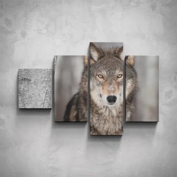 4-dílný obraz - Vlk