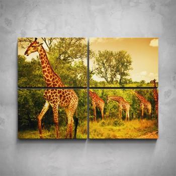 4-dílný obraz - Stádo žiraf