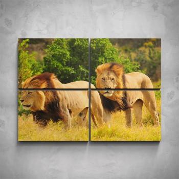 4-dílný obraz - Dva lvi