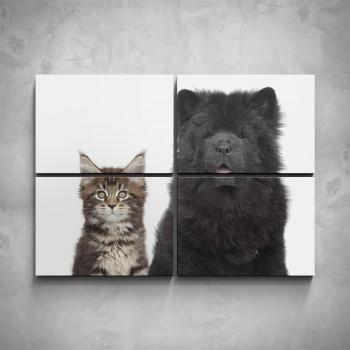4-dílný obraz - Štěně a kotě