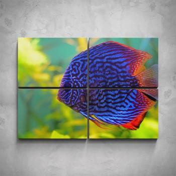 4-dílný obraz - Modrá rybka