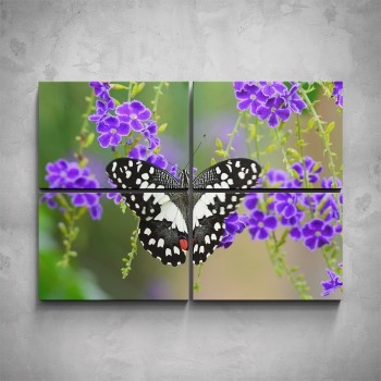 4-dílný obraz - Černobílý motýl