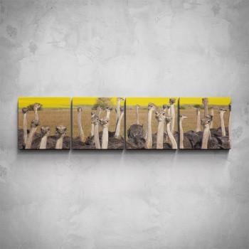 4-dílný obraz - Pštrosy