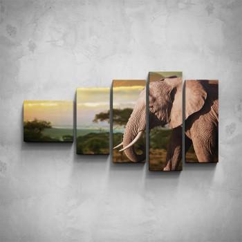 5-dílný obraz - Slon