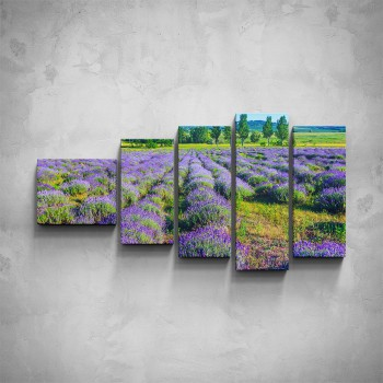 5-dílný obraz - Levandulové pole