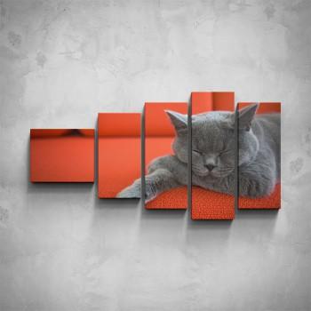 5-dílný obraz - Britská modrá kočka