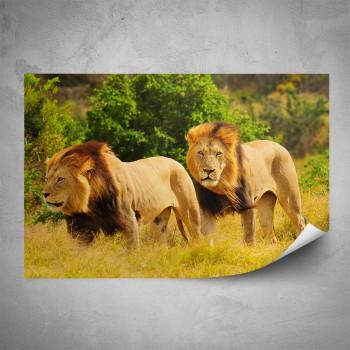 Plakát - Dva lvi