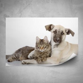 Plakát - Pes a kočka