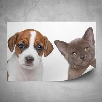 Plakát - Štěně a kotě