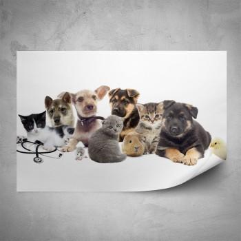 Plakát - Zvířecí mláďata