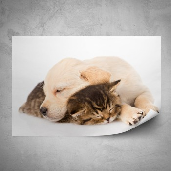 Plakát - Spící štěně s kotětem