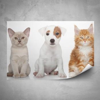 Plakát - Dvě koťata a štěně