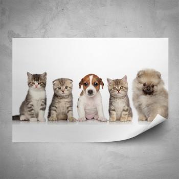 Plakát - Koťata a štěně