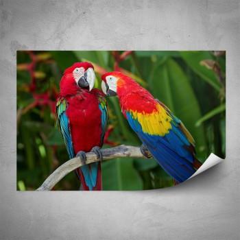 Plakát - Papoušci