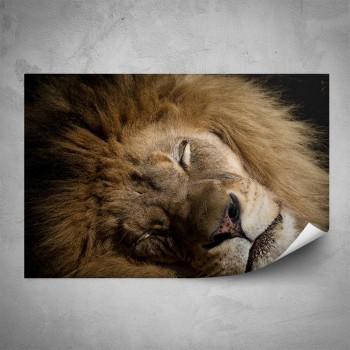 Plakát - Spící lev
