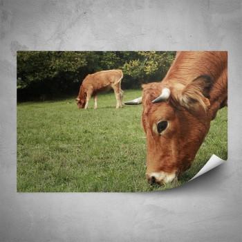 Plakát - Pasoucí se krávy
