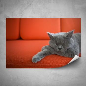 Plakát - Britská modrá kočka