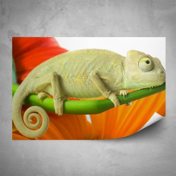 Plakát - Chameleon