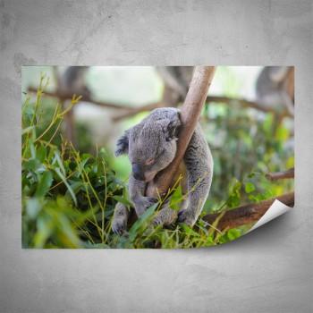 Plakát - Koala
