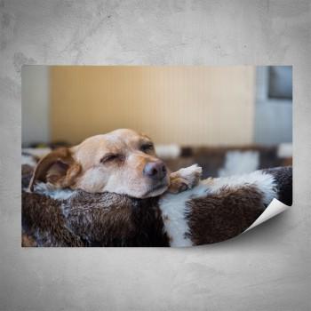 Plakát - Spící pes