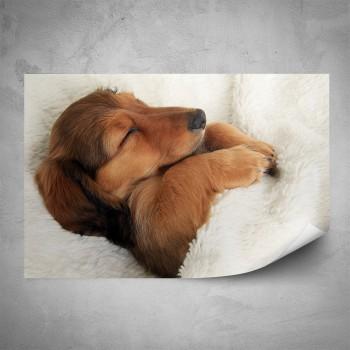 Plakát - Spící štěně