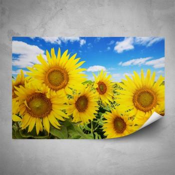 Plakát - Slunečnice