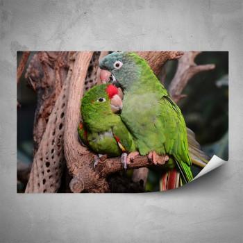 Plakát - Zelení papoušci